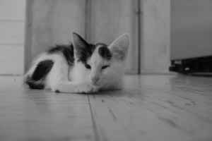 A Common Cat Litter Box Problem - Feline UT