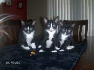 free cat and kitten content for your website or blog
